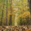 Les couleurs de l'automne au Centre écologique Fernand-Seguin
