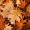 Feuilles mortes, résidus de gazon et jardin, Salaberry-de-Valleyfield invite ses citoyens à faire du compostage ou à utiliser ses dépôts