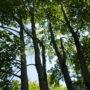 La population invitée à participer au nouveau régime forestier du Québec