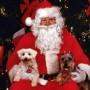 Parade de Noël à Rivière-Beaudette samedi le 11 décembre