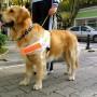 Le Club Lions Ormstown vous invite avec votre chien à la Marche Purina