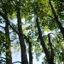Volet 2 du Programme de mise en valeur des ressources du milieu forestier