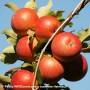 Attirer et fidéliser les bons employés du domaine agricole