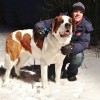La SPCA a besoin de promeneurs de chiens
