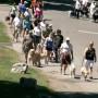 Marche bénéfice pour la formation de chiens-guides