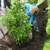 Chronique de Lucie Charlebois – Plantation d'arbres et cours d'écoles
