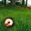 Ravageurs de pelouses – Conférences sur les vers blancs