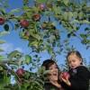 L'automne et le Temps des Pommes dans le Suroît