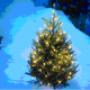 Recycler son sapin de Noël