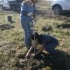 Reboisement à Beauharnois, Phase 2 : Parrainez un arbre