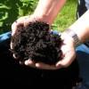 Pour tout savoir sur le compostage domestique