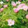 COBAVER-VS à la Journée Verte de Saint-Clet
