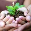 Inauguration d'un nouveau parc et plantation d'arbres