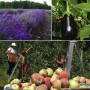 Circuit du Paysan – Fleurs, fruits et légumes à découvrir