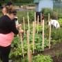 Un jardin communautaire au Carrefour jeunesse-emploi