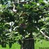 Des pommes et du miel sur l'Île Saint-Bernard