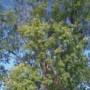 Mieux connaître nos arbres grâce à Crivert
