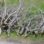 Ménage du printemps et collectes de vieilles branches