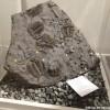 La paléontologie à l'honneur à la Pointe-du-Buisson