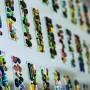 Des vitraux multicolores à l'école Saint-Paul