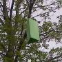 Châteauguay prend ses précautions face à l'agrile du frêne