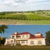 Le Vignoble Cortellino – À découvrir à Saint-Urbain-Premier