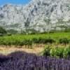 Soirée-conférence : Provence, une palette de couleurs