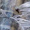 Bris d'aqueduc au centre-ville – Travaux en cours