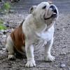 Fermeture temporaire du parc à chiens de Valleyfield
