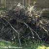 Collectes de branches et de feuilles mortes à Châteauguay