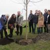Une Politique de l'arbre pour Salaberry-de-Valleyfield