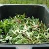 Résidus verts : des collectes automnales à Vaudreuil-Dorion