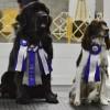 Des chiens obéissants en compétitions à Valleyfield