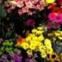 Affaires – Profession fleuriste : De Fleur en Fille