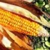 La Fête du Maïs célébrée à Châteauguay et Kahnawake