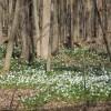 Centre écologique Fernand-Seguin : période de floraison exceptionnelle