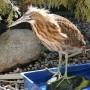 Le Nichoir présente un premier Festival des oiseaux et de la nature
