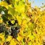 Des escapades gourmandes dans Beauharnois-Salaberry pour le long week-end