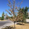Plusieurs jeunes arbres assoiffés : les citoyens invités à donner un coup de pouce