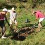 Semaine de l'arbre à Valleyfield : documentaire, conférence et plantation citoyenne