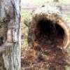 Plus de 30 arbres seront abattus dans le parc Salaberry et sur la rue Montcalm