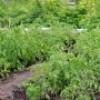 Espaces disponibles au jardin communautaire du parc des Ainés : inscriptions en cours