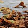 Feuilles mortes et résidus verts – collectes spéciales et règlementation