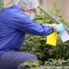 TGOD Valleyfield : le plus grand centre de production biologique de cannabis au monde