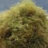 En attendant le bac brun, les riverains devront aller porter leurs algues à l'Écocentre