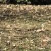 Ménage du printemps avec cinq collectes de résidus verts à Valleyfield