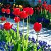 Période des inscriptions pour le concours Jardins Fleuris à Sainte-Martine