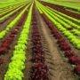 De l'hébergement pour des travailleurs venus prêter main-forte aux producteurs agricoles