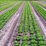 Main-d'oeuvre agricole : Des milliers de travailleurs attendus dans la région
