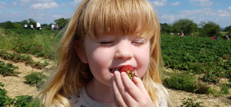 Agrotourisme – L'autocueillette en temps de COVID